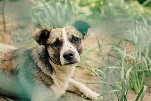 chien association stéphane lamarre